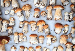 Fall Fungi Mushrooms' Surprising Health Benefits